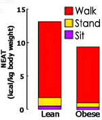 Lean people walk and stand more than obese people.